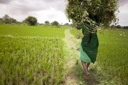 Dones: la força del canvi a l'Índia. Fotografía de Albert Uriach. Únicamente para ilustrar el post.